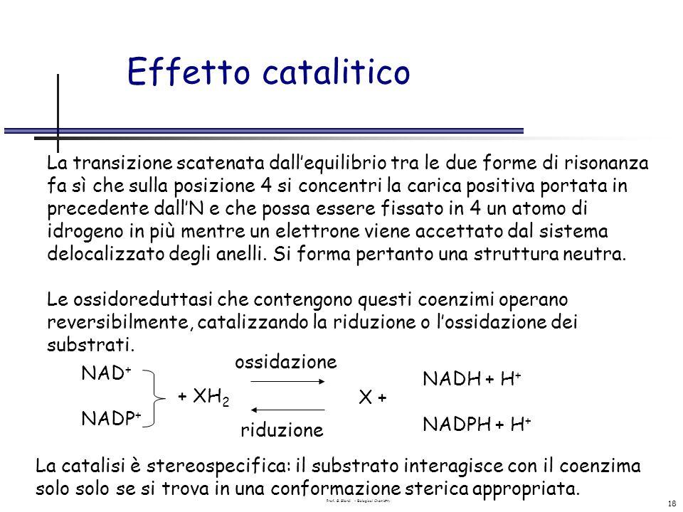 Prof. G. Gilardi - Biological Chemistry 18 Effetto catalitico La transizione scatenata dallequilibrio tra le due forme di risonanza fa sì che sulla po