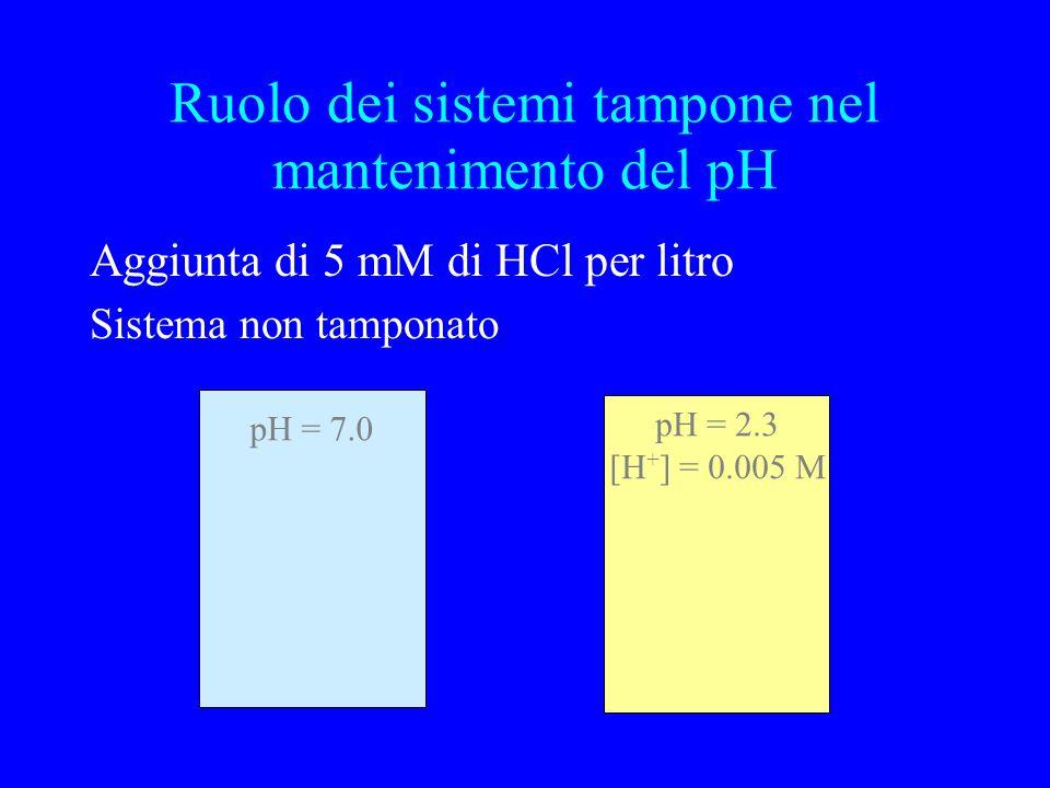 Ruolo dei sistemi tampone nel mantenimento del pH Aggiunta di 5 mM di HCl per litro Sistema non tamponato pH = 7.0 pH = 2.3 [H + ] = 0.005 M