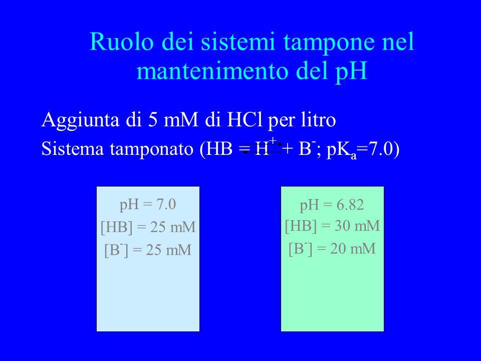 Aggiunta di 5 mM di HCl per litro Sistema tamponato (HB = H + + B - ; pK a =7.0) pH = 7.0 [HB] = 25 mM [B - ] = 25 mM [HB] = 30 mM [B - ] = 20 mM pH = 6.82 Ruolo dei sistemi tampone nel mantenimento del pH