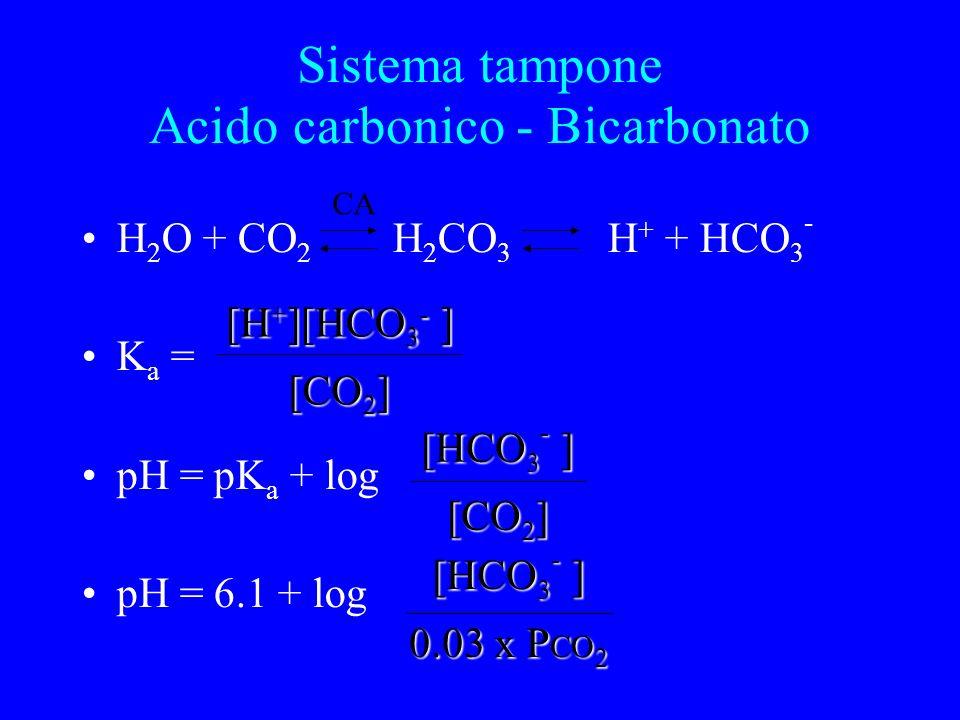 H 2 O + CO 2 H 2 CO 3 H + + HCO 3 - K a = pH = pK a + log pH = 6.1 + log CA [CO 2 ] [H + ][HCO 3 - ] [CO 2 ] [HCO 3 - ] 0.03 x P CO 2 [HCO 3 - ] Sistema tampone Acido carbonico - Bicarbonato