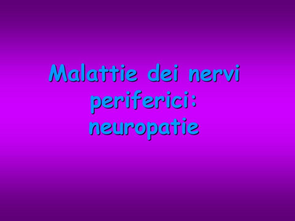 Generalità sul SNP Nervi spinali –Corpo cellulare allinterno della sostanza grigia del midollo spinale (cellule a funzione motoria) o nei gangli spinali (cellule a funzione sensitiva) –Assoni emergono dal midollo con le radici (ventrali a funzione motoria, dorsali a funzione sensitiva) Nervi cranici –Corpo cellulare allinterno del tronco encefalico –Assoni emergono dal tronco dellencefalo e fuoriescono dai forami cranici