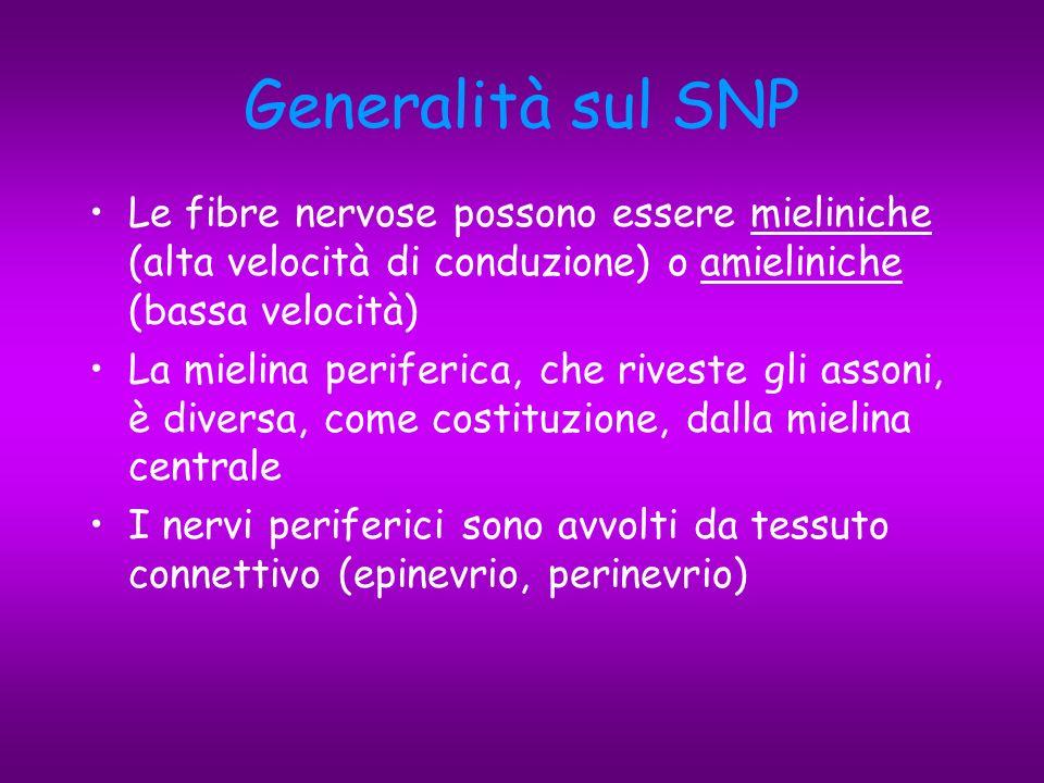 Neuropatie: classificazione 1.