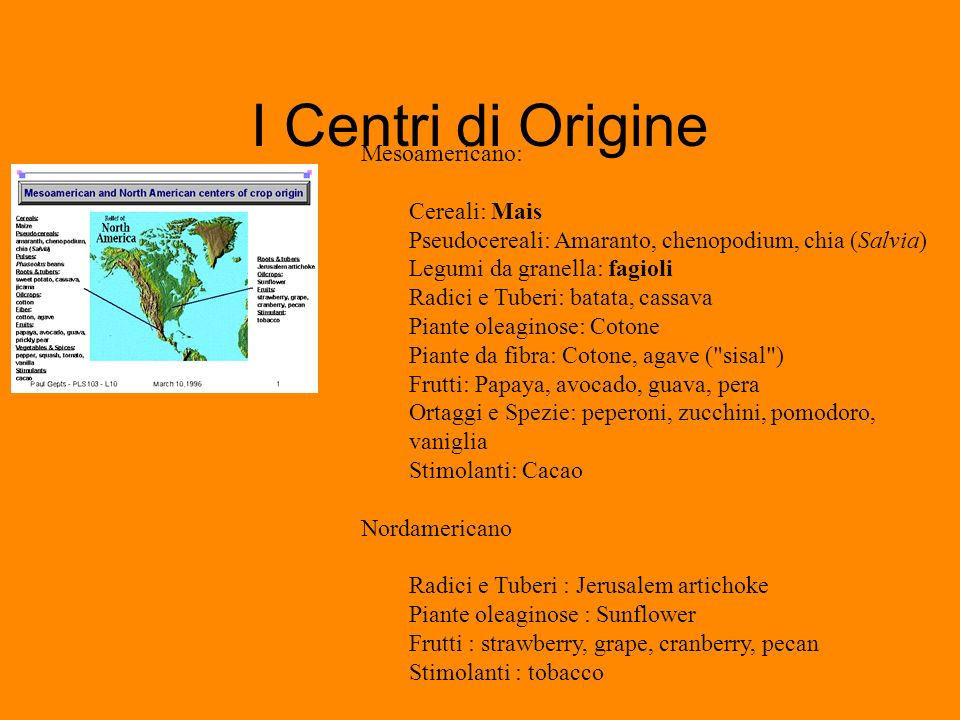 I Centri di Origine Mesoamericano: Cereali: Mais Pseudocereali: Amaranto, chenopodium, chia (Salvia) Legumi da granella: fagioli Radici e Tuberi: bata