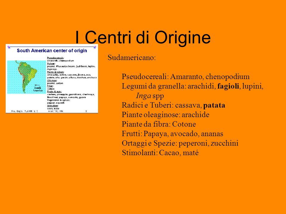 I Centri di Origine Sudamericano: Pseudocereali: Amaranto, chenopodium Legumi da granella: arachidi, fagioli, lupini, Inga spp Radici e Tuberi: cassav