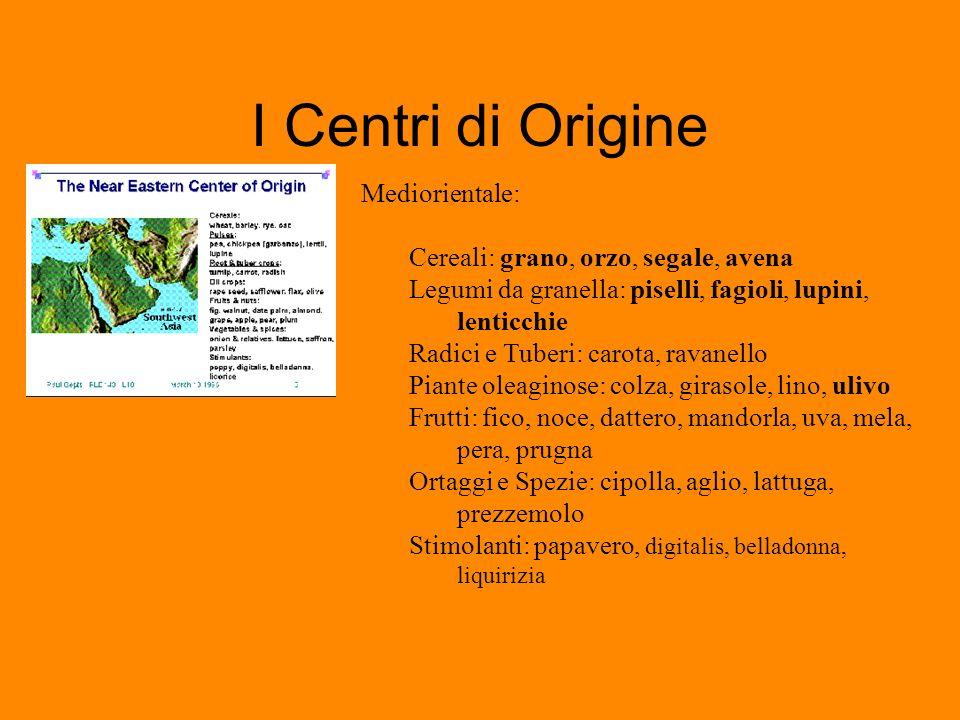 I Centri di Origine Mediorientale: Cereali: grano, orzo, segale, avena Legumi da granella: piselli, fagioli, lupini, lenticchie Radici e Tuberi: carot