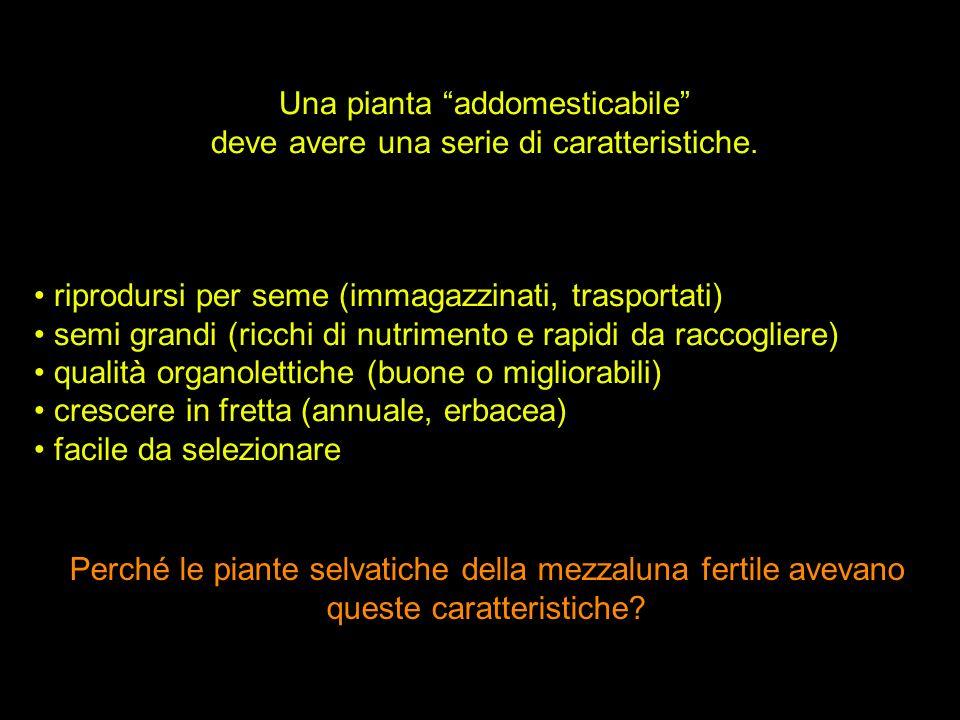 Una pianta addomesticabile deve avere una serie di caratteristiche. riprodursi per seme (immagazzinati, trasportati) semi grandi (ricchi di nutrimento
