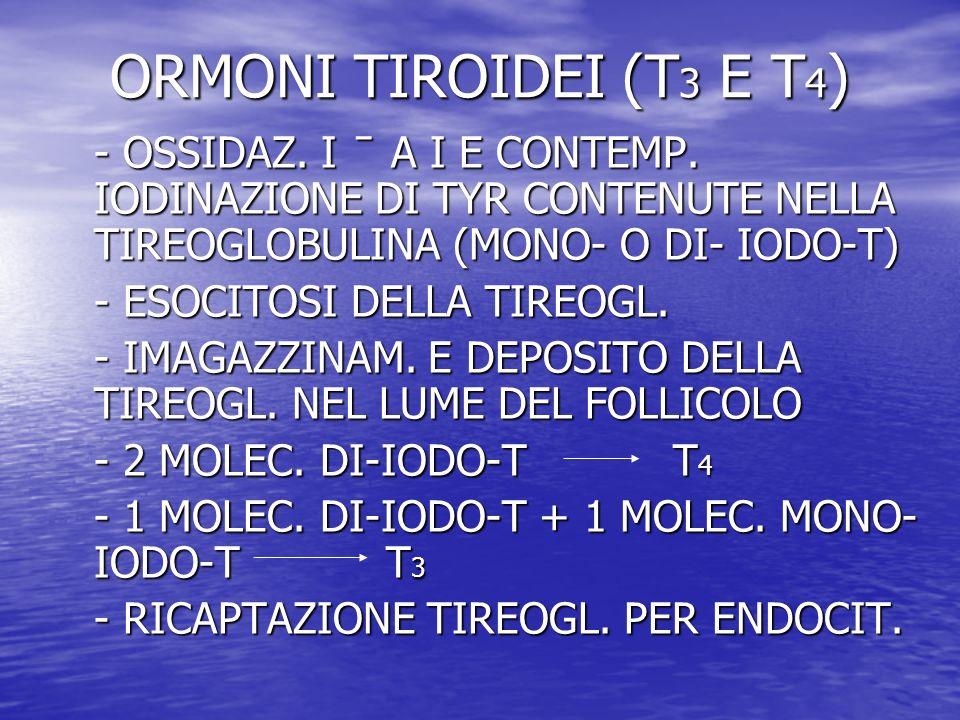 ORMONI TIROIDEI (T 3 E T 4 ) - OSSIDAZ. I ̄ A I E CONTEMP. IODINAZIONE DI TYR CONTENUTE NELLA TIREOGLOBULINA (MONO- O DI- IODO-T) - ESOCITOSI DELLA TI
