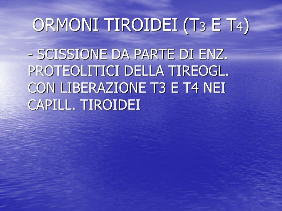 ORMONI TIROIDEI (T 3 E T 4 ) - SCISSIONE DA PARTE DI ENZ. PROTEOLITICI DELLA TIREOGL. CON LIBERAZIONE T3 E T4 NEI CAPILL. TIROIDEI