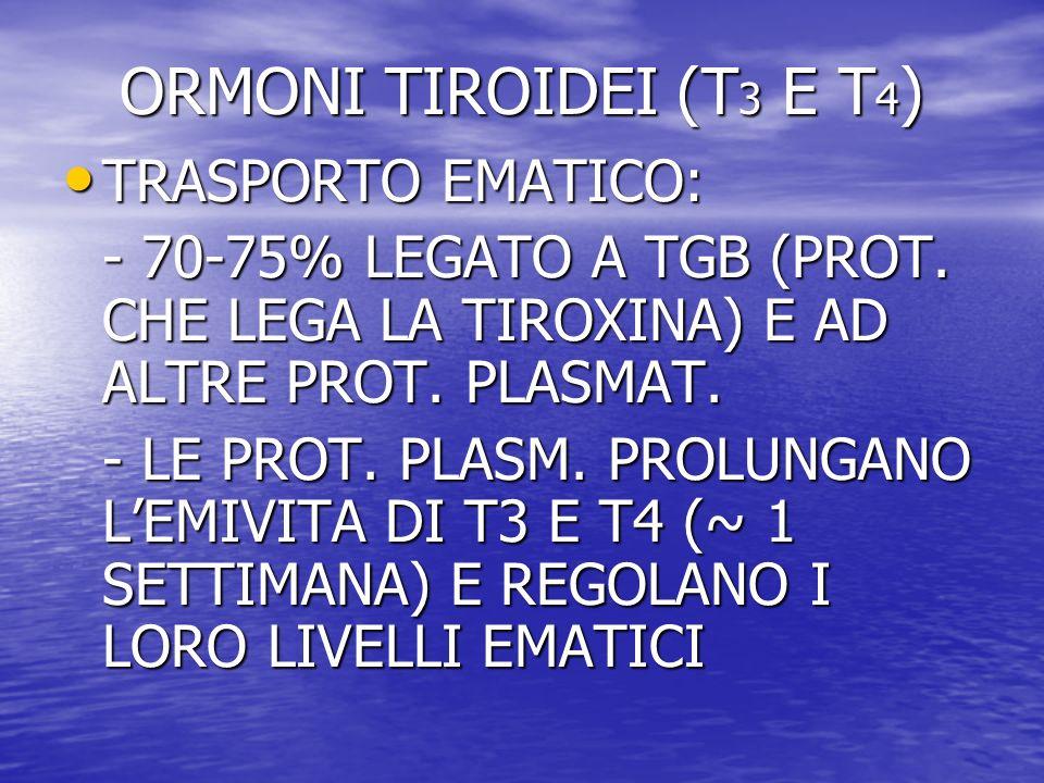 TRASPORTO EMATICO: TRASPORTO EMATICO: - 70-75% LEGATO A TGB (PROT. CHE LEGA LA TIROXINA) E AD ALTRE PROT. PLASMAT. - LE PROT. PLASM. PROLUNGANO LEMIVI