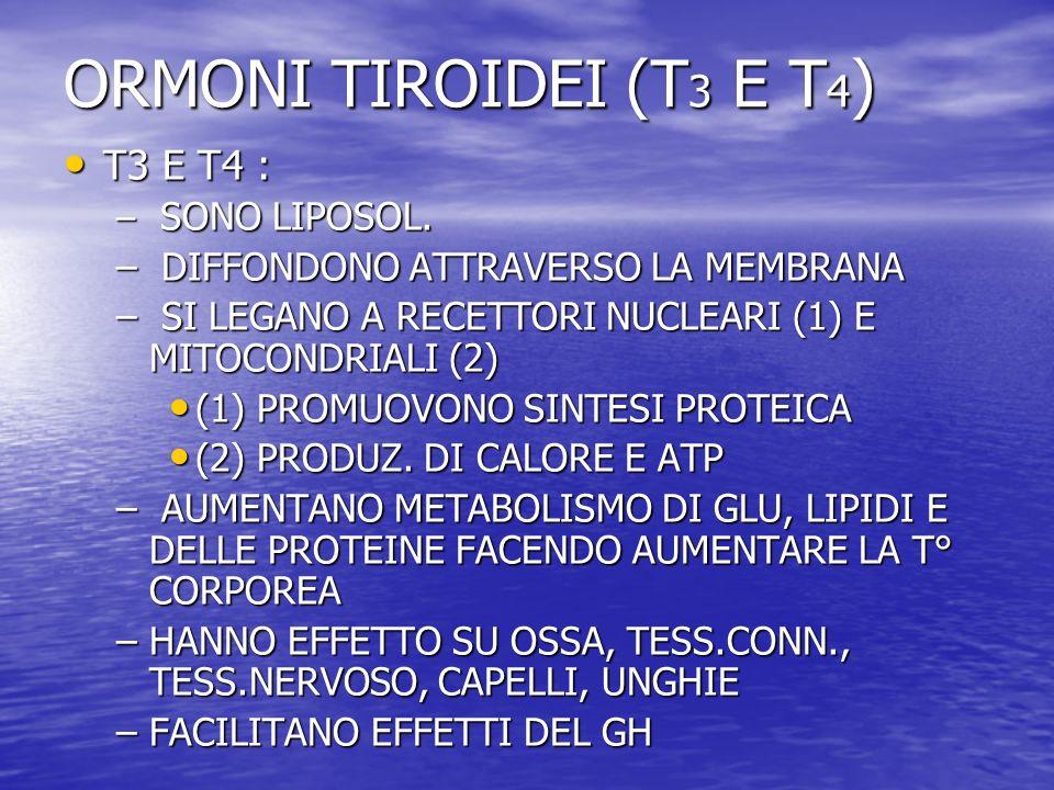 ORMONI TIROIDEI (T 3 E T 4 ) T3 E T4 : T3 E T4 : – SONO LIPOSOL. – DIFFONDONO ATTRAVERSO LA MEMBRANA – SI LEGANO A RECETTORI NUCLEARI (1) E MITOCONDRI