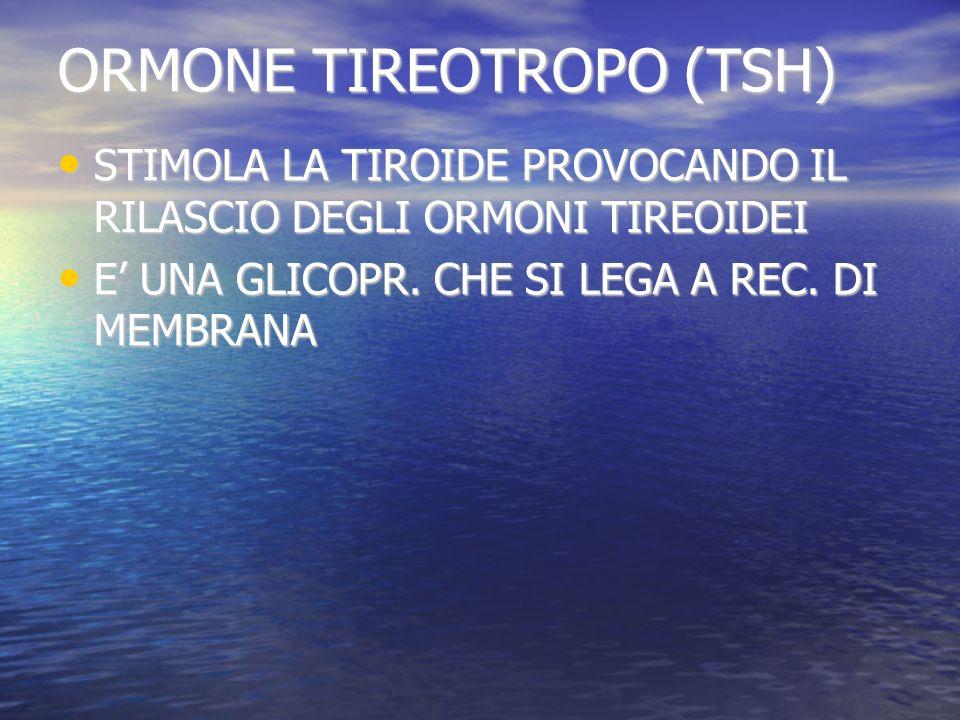 ORMONE TIREOTROPO (TSH) STIMOLA LA TIROIDE PROVOCANDO IL RILASCIO DEGLI ORMONI TIREOIDEI STIMOLA LA TIROIDE PROVOCANDO IL RILASCIO DEGLI ORMONI TIREOIDEI E UNA GLICOPR.