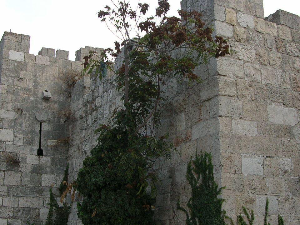 Le mura 4