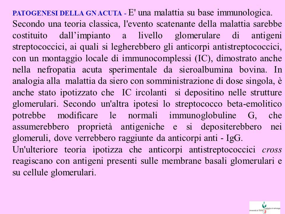PATOGENESI DELLA GN ACUTA - E una malattia su base immunologica.