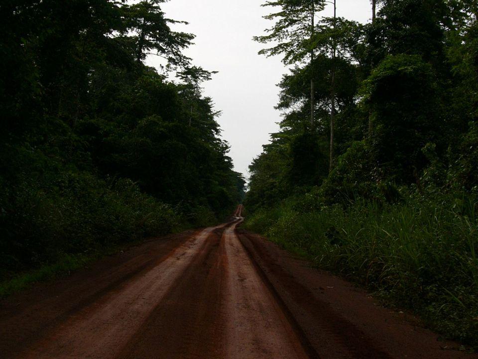 Globalizzazion e delle attività di estrazione del legno: Eliminazione delle restrizioni sugli investimenti stranieri. Riduzione delle barriere commerc