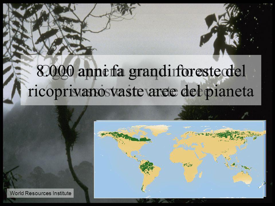 Le foreste: i parchi del pianeta
