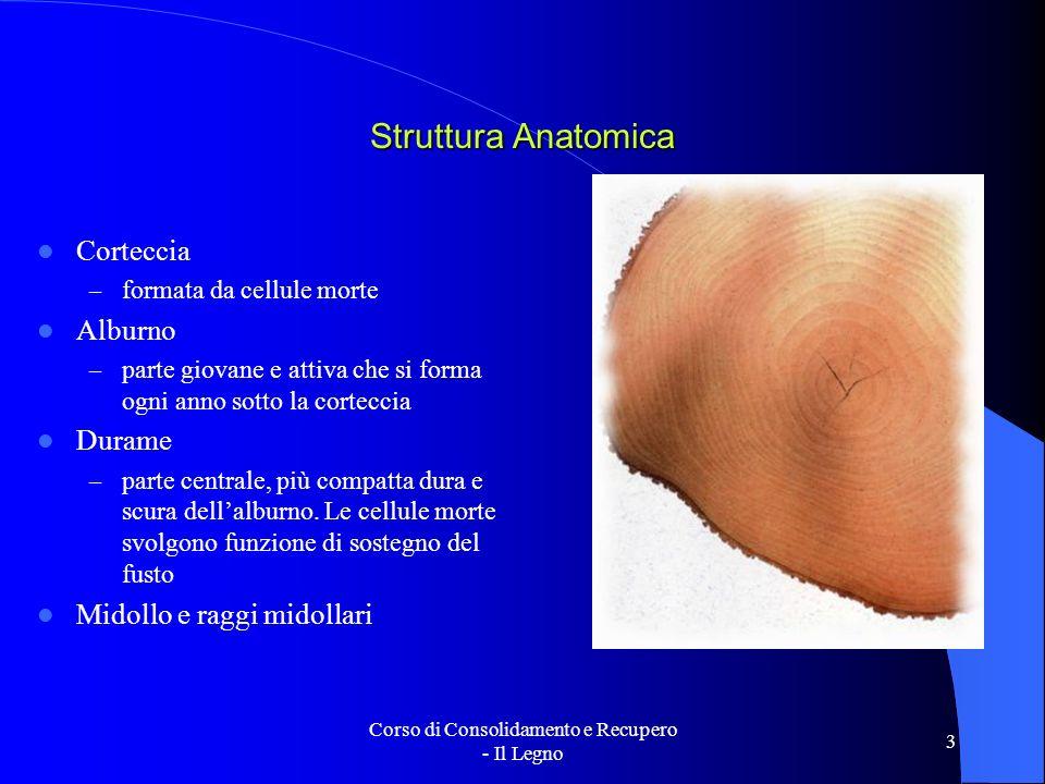 Corso di Consolidamento e Recupero - Il Legno 3 Struttura Anatomica Corteccia – formata da cellule morte Alburno – parte giovane e attiva che si forma