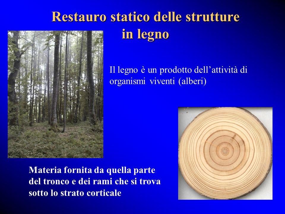 Restauro statico delle strutture in legno Il legno è un prodotto dellattività di organismi viventi (alberi) Materia fornita da quella parte del tronco e dei rami che si trova sotto lo strato corticale