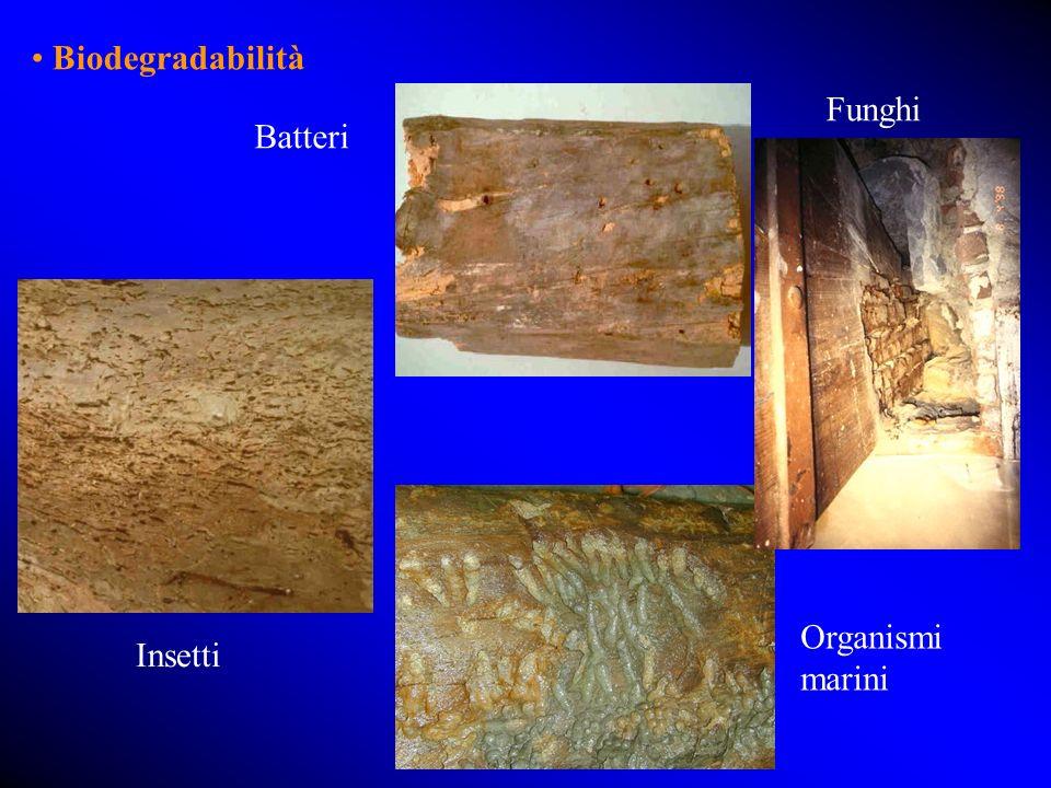 Biodegradabilità Batteri Insetti Organismi marini Funghi