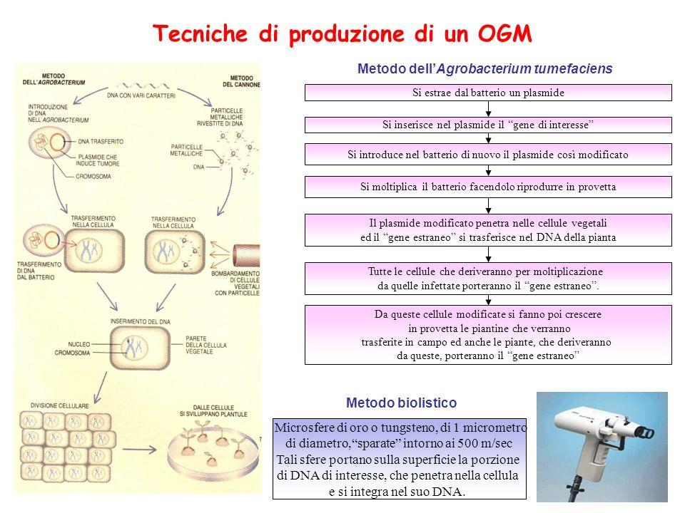 Tecniche di produzione di un OGM Si estrae dal batterio un plasmide Si inserisce nel plasmide il gene di interesse Si introduce nel batterio di nuovo