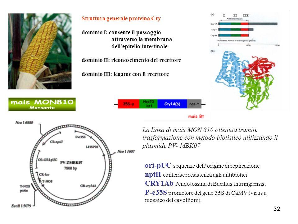 32 Struttura generale proteina Cry dominio I: consente il passaggio attraverso la membrana dellepitelio intestinale dominio II: riconoscimento del rec