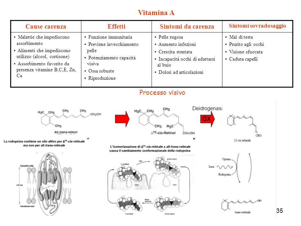 35 Cause carenzaEffettiSintomi da carenza Sintomi sovradosaggio Malattie che impediscono assorbimento Alimenti che impediscono utilizzo (alcool, corti