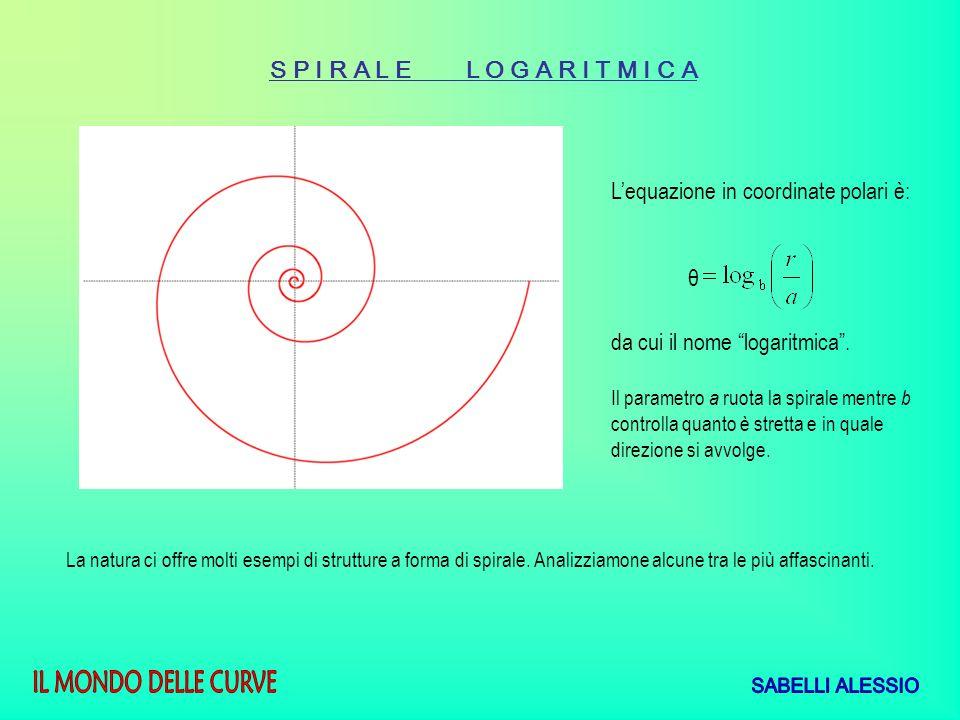 S P I R A L E L O G A R I T M I C A Lequazione in coordinate polari è: θ da cui il nome logaritmica. Il parametro a ruota la spirale mentre b controll