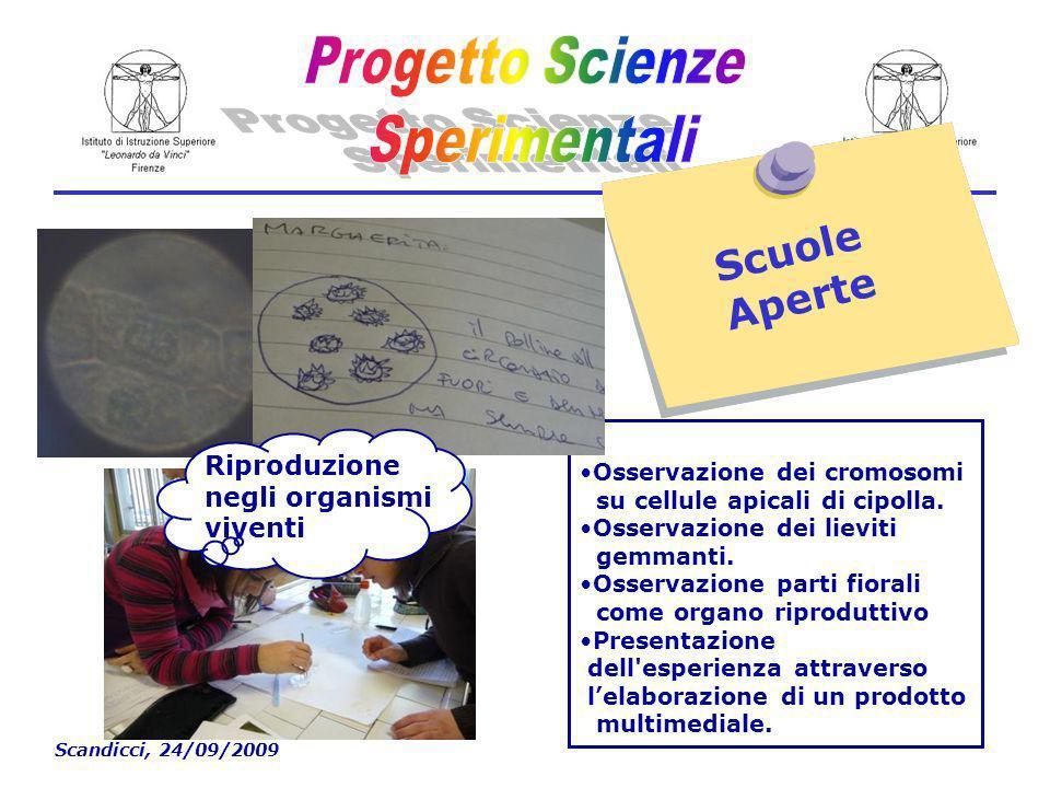 Scandicci, 24/09/2009 Scuole Aperte Osservazione dei cromosomi su cellule apicali di cipolla.