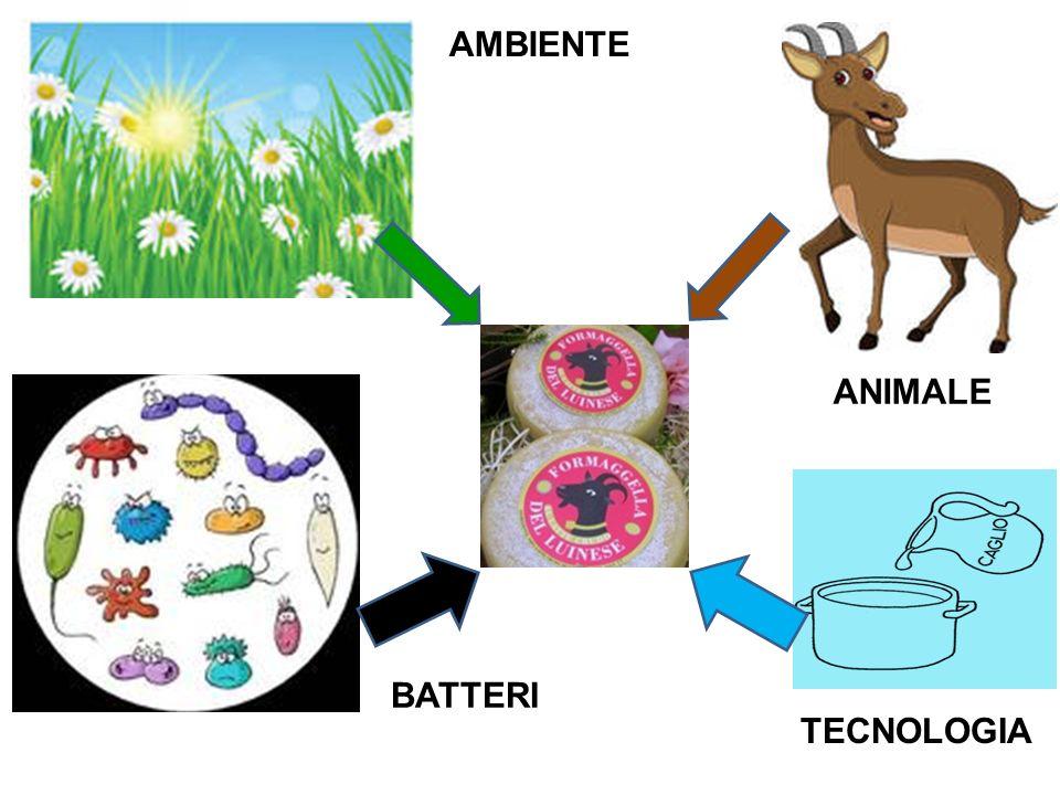 AMBIENTE ANIMALE BATTERI TECNOLOGIA