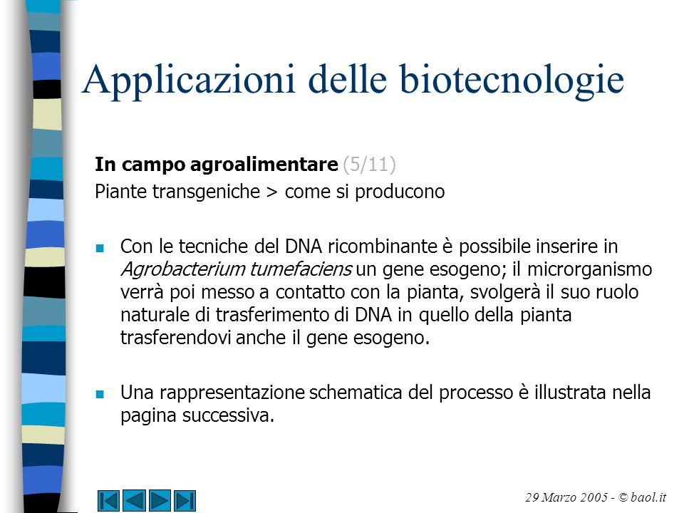 Applicazioni delle biotecnologie schema della tecnica di produzione di piante transgeniche con Agrobacterium Tumefaciens 29 Marzo 2005 - © baol.it