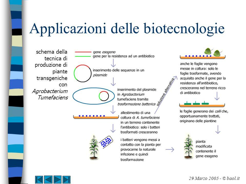 Applicazioni delle biotecnologie Un altro sistema utilizzato per la produzione di piante transgeniche è quello del cosiddetto gene gun , qui rappresentato schematicamente 29 Marzo 2005 - © baol.it