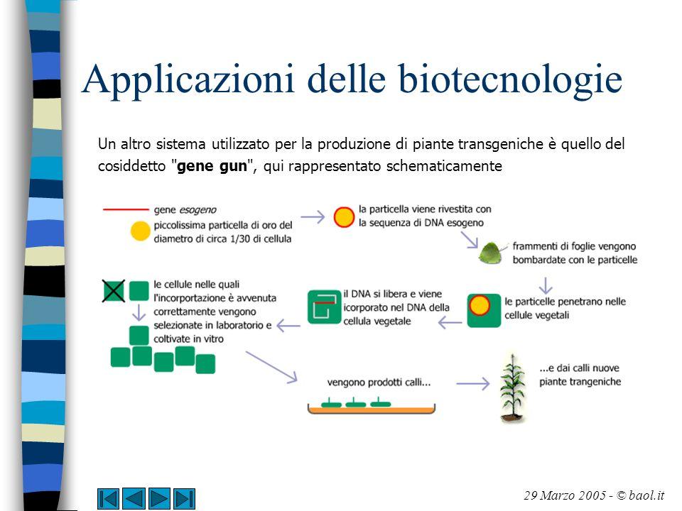 Applicazioni delle biotecnologie Un altro sistema utilizzato per la produzione di piante transgeniche è quello del cosiddetto