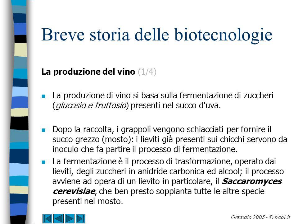 Breve storia delle biotecnologie La produzione del vino (2/4) n La fermentazione procede in modo tumultuoso ed in pochi giorni tutto lo zucchero inizialmente presente nel mosto (dal 10 al 25% del peso) viene trasformato in anidride carbonica ed alcool.