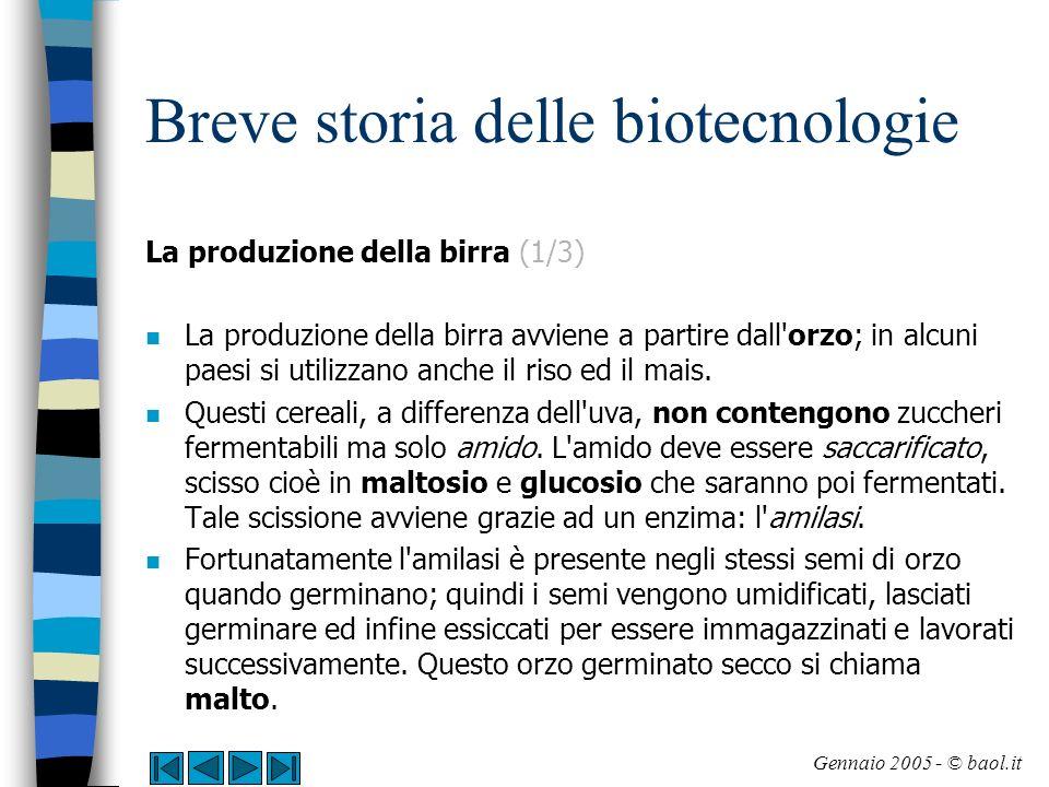 Breve storia delle biotecnologie La produzione della birra (2/3) n Il primo passaggio per la produzione di birra è dunque la macinazione del malto in ambiente umido: viene così attivata la scissione dell amido.