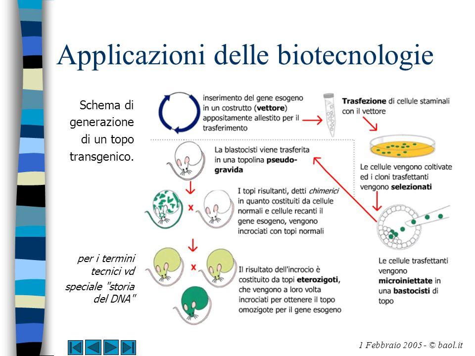 Applicazioni delle biotecnologie Schema di generazione di un topo transgenico. per i termini tecnici vd speciale