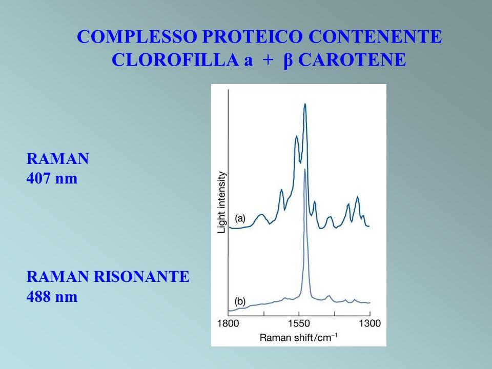 RAMAN 407 nm RAMAN RISONANTE 488 nm COMPLESSO PROTEICO CONTENENTE CLOROFILLA a + β CAROTENE