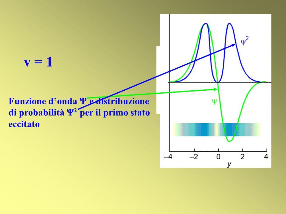 v = 1 Funzione donda Ψ e distribuzione di probabilità Ψ 2 per il primo stato eccitato