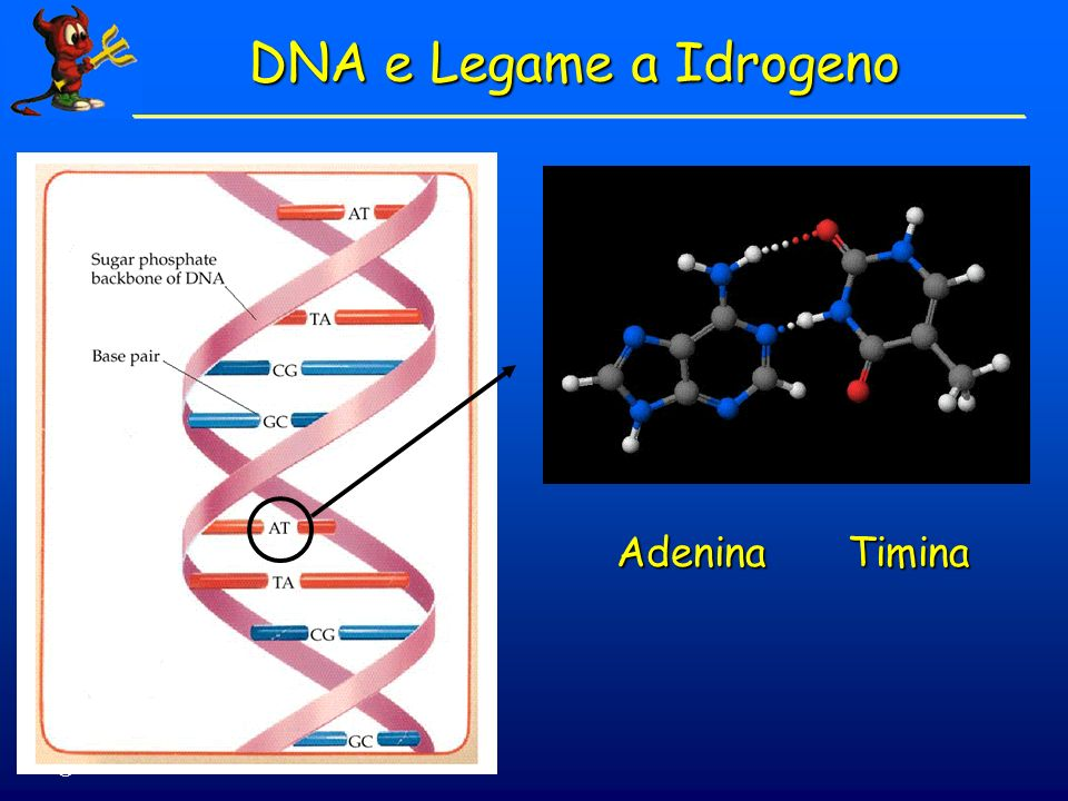 © Dario Bressanini AdeninaTimina DNA e Legame a Idrogeno