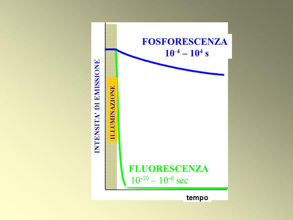FOSFORESCENZA 10 -4 – 10 4 s tempo FLUORESCENZA 10 -10 – 10 -6 sec INTENSITA DI EMISSIONE ILLUMINAZIONE