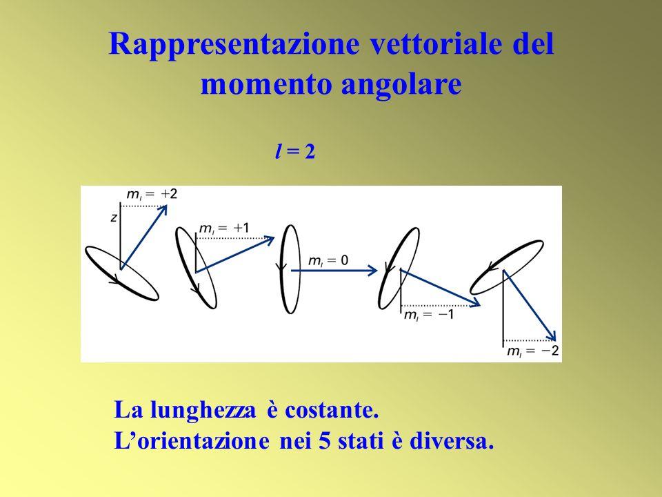 Rappresentazione vettoriale del momento angolare La lunghezza è costante. Lorientazione nei 5 stati è diversa. l = 2