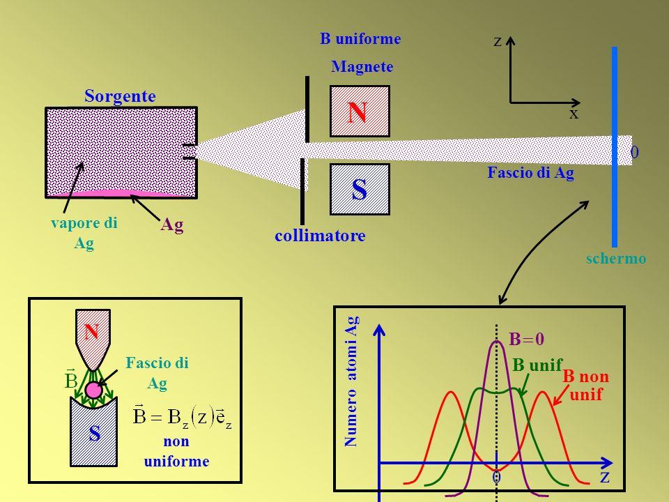 Sorgente Ag vapore di Ag collimatore schermo z x Fascio di Ag N S Magnete 0 N S Fascio di Ag non uniforme z 0 Numero atomi Ag B 0 B unif B non unif B