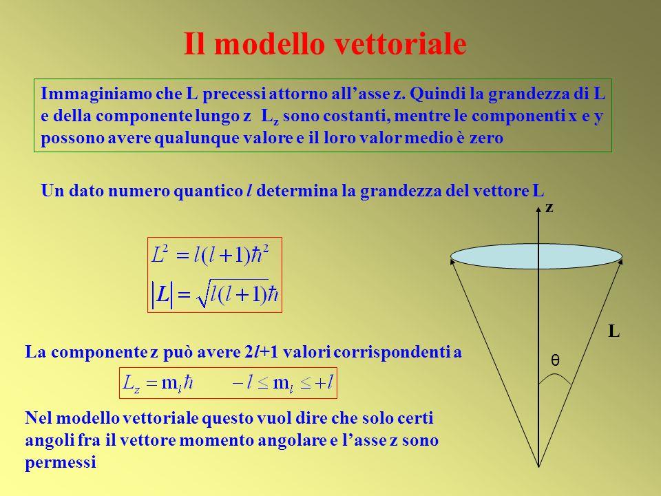 Il modello vettoriale La componente z può avere 2l+1 valori corrispondenti a Nel modello vettoriale questo vuol dire che solo certi angoli fra il vett