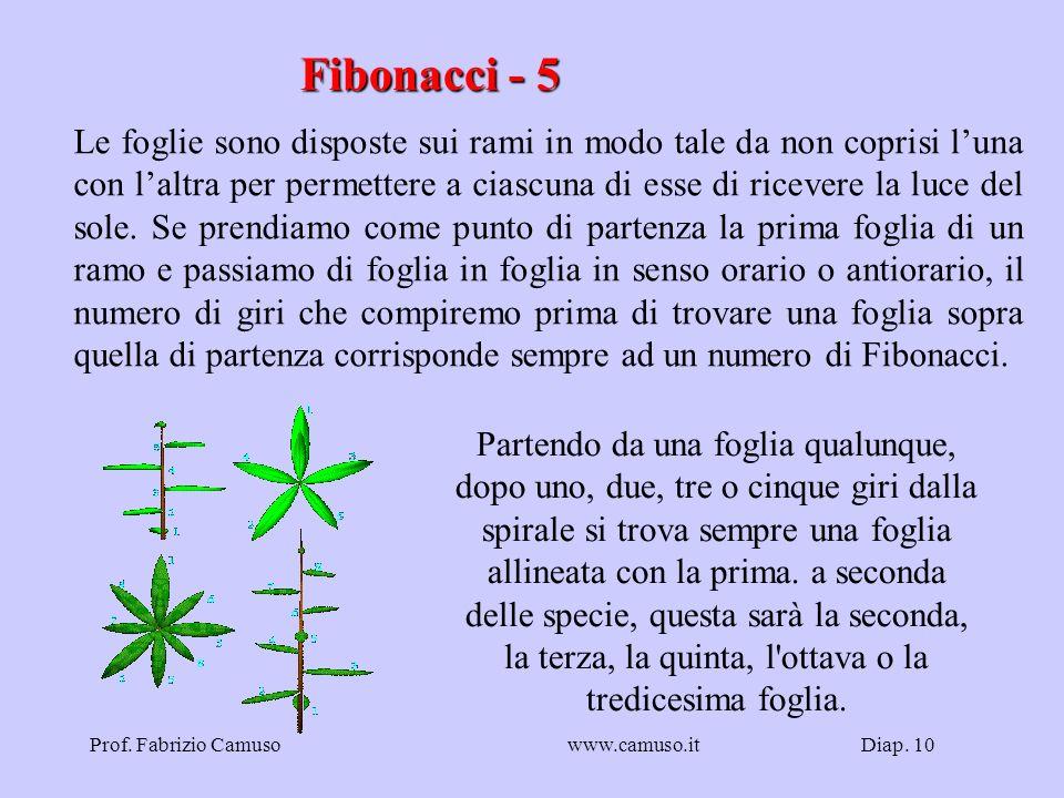Diap. 10Prof. Fabrizio Camusowww.camuso.it Fibonacci - 5 Le foglie sono disposte sui rami in modo tale da non coprisi luna con laltra per permettere a