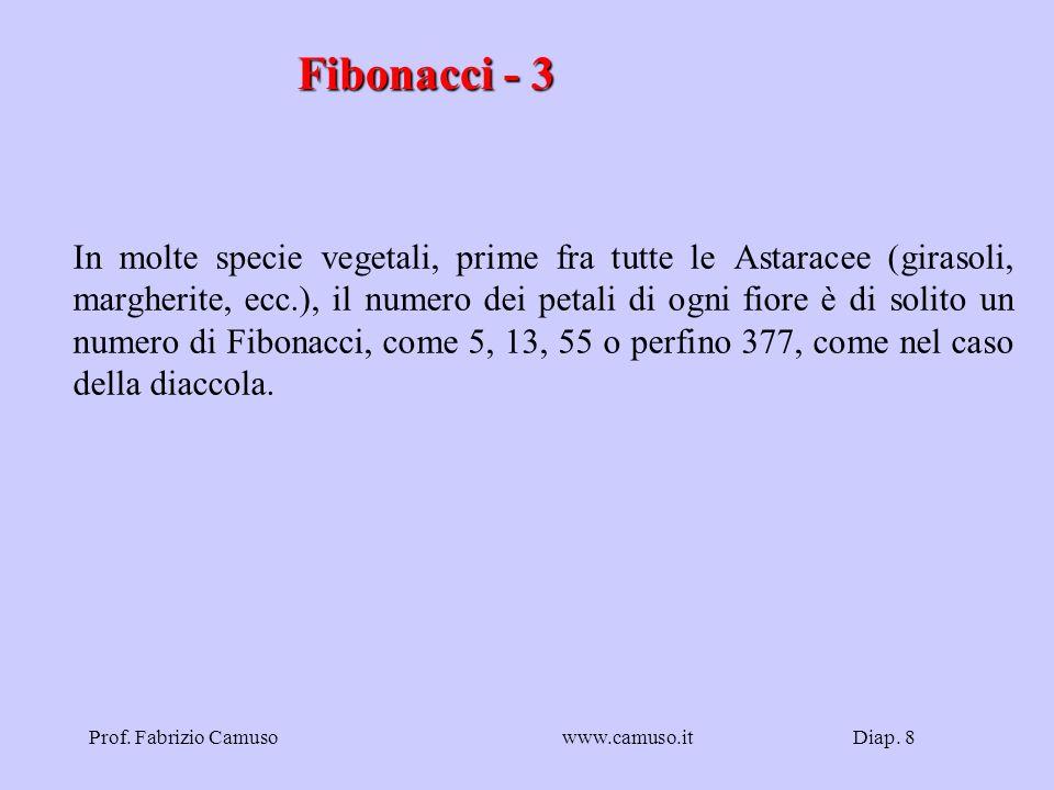 Diap. 8Prof. Fabrizio Camusowww.camuso.it Fibonacci - 3 In molte specie vegetali, prime fra tutte le Astaracee (girasoli, margherite, ecc.), il numero