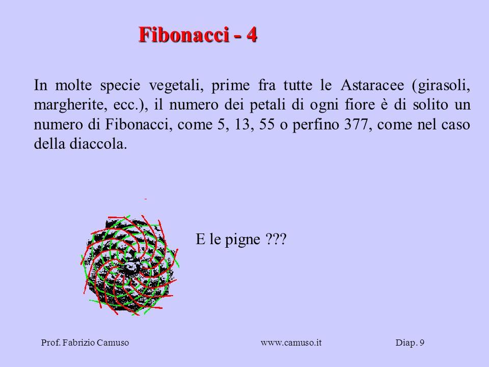 Diap. 9Prof. Fabrizio Camusowww.camuso.it Fibonacci - 4 In molte specie vegetali, prime fra tutte le Astaracee (girasoli, margherite, ecc.), il numero