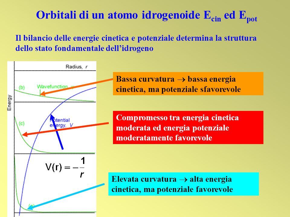 Orbitali di un atomo idrogenoide E cin ed E pot Il bilancio delle energie cinetica e potenziale determina la struttura dello stato fondamentale dellid