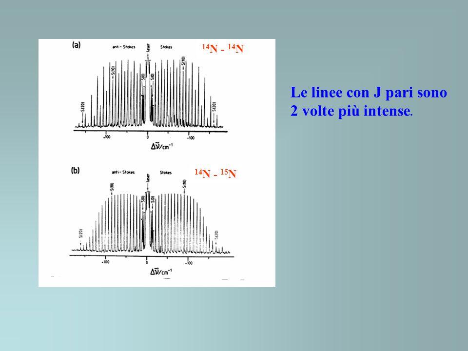 14 N - 14 N 14 N - 15 N Le linee con J pari sono 2 volte più intense.