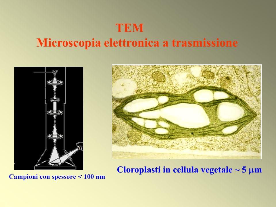 Natura ondulatoria degli elettroni APPLICAZIONI Microscopia elettronica in trasmissione Diffrazione di elettroni: molecole in fase gassosa Diffrazione