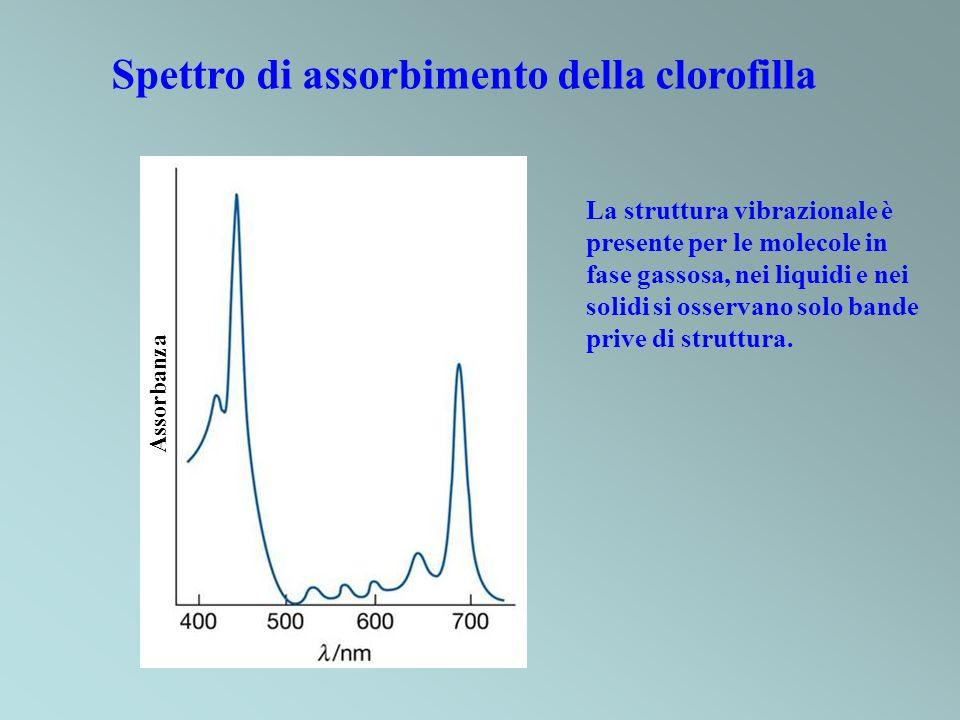 Spettro di assorbimento della clorofilla Assorbanza La struttura vibrazionale è presente per le molecole in fase gassosa, nei liquidi e nei solidi si