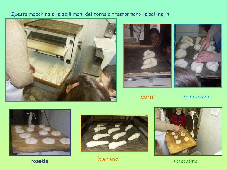 Questa macchina e le abili mani del fornaio trasformano le palline in: banane corni spaccatine mantovane rosette