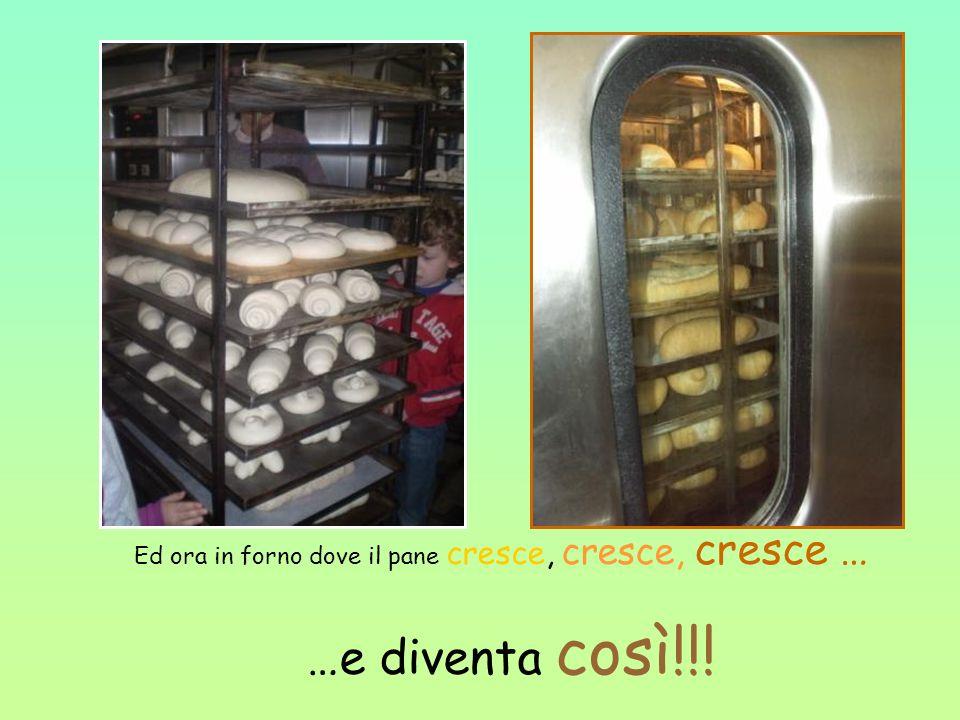 Ed ora in forno dove il pane cresce, cresce, cresce … …e diventa così!!!